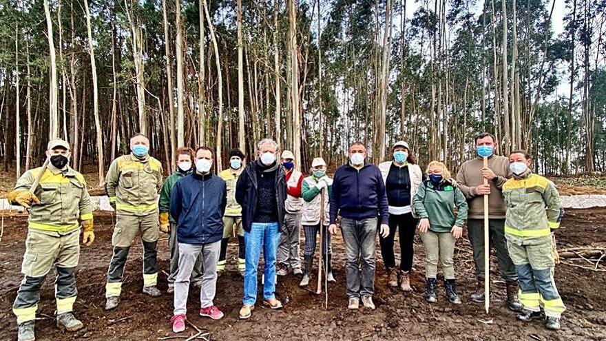 Cerezos para sustituir a los eucaliptos en Caldas