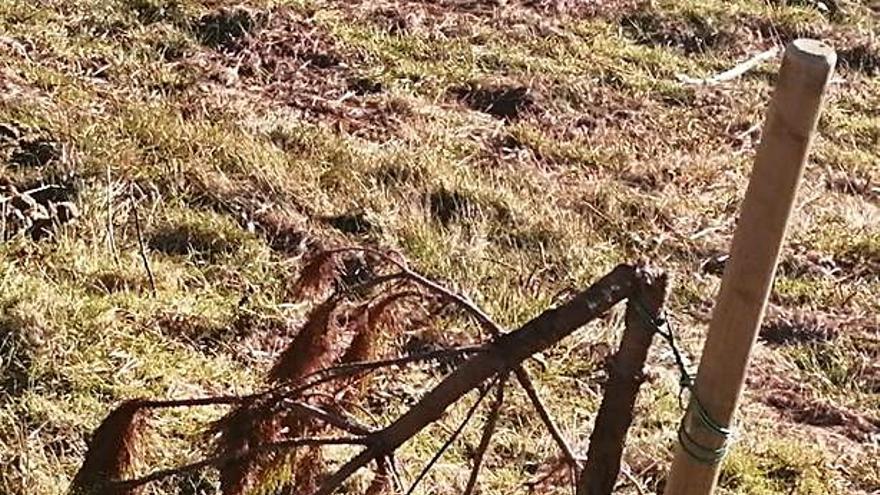 Vecinos de Souto y Arca urgen a Rapa das Bestas a retirar reses que les causan daños