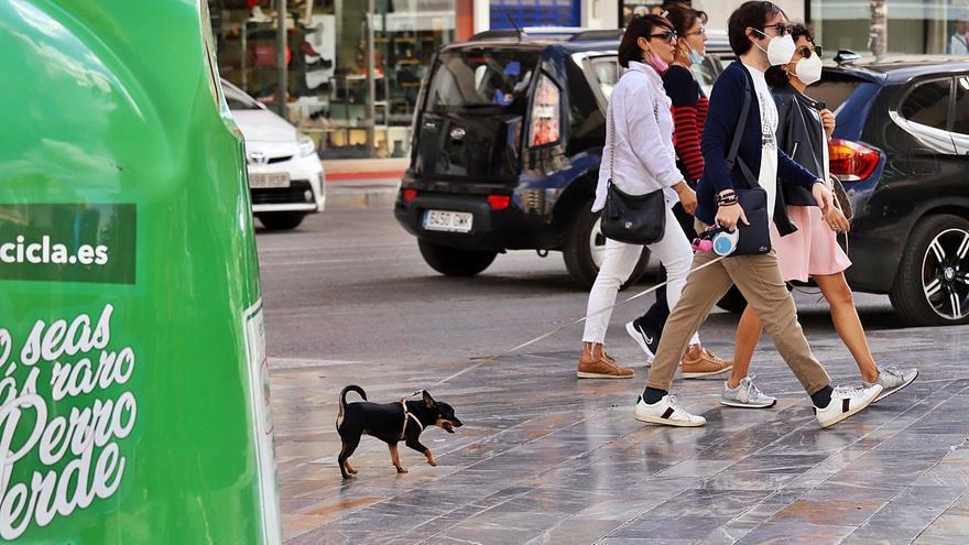 Ley de Protección Animal: tener mascota no volverá a ser lo mismo