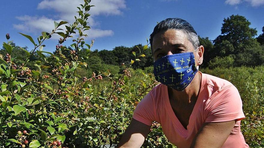 """Las lluvias y la falta de sol """"pasan factura"""" a la temporada asturiana de frutos rojos"""