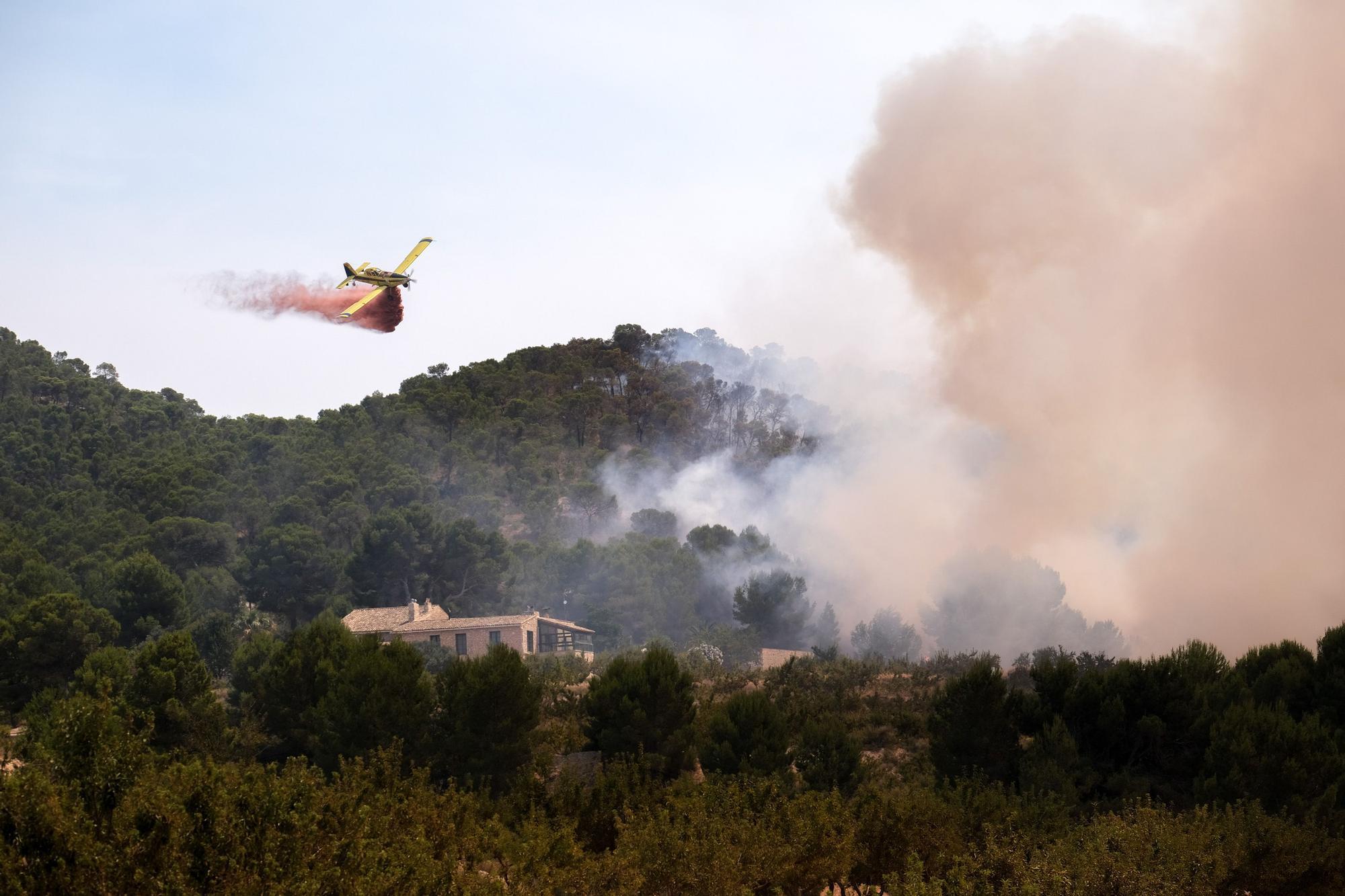 Un año después del incendio forestal en la sierra de la Zafra y Las Pedrizas de Monóvar la zona presenta un aspecto desolador