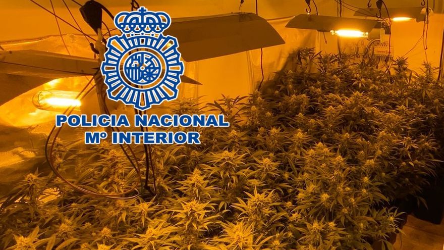 Tres detenidos en tres operaciones contra el cultivo y tráfico de marihuana en Córdoba