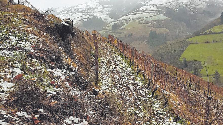 Los cultivos se refuerzan con las nevadonas de principios de año