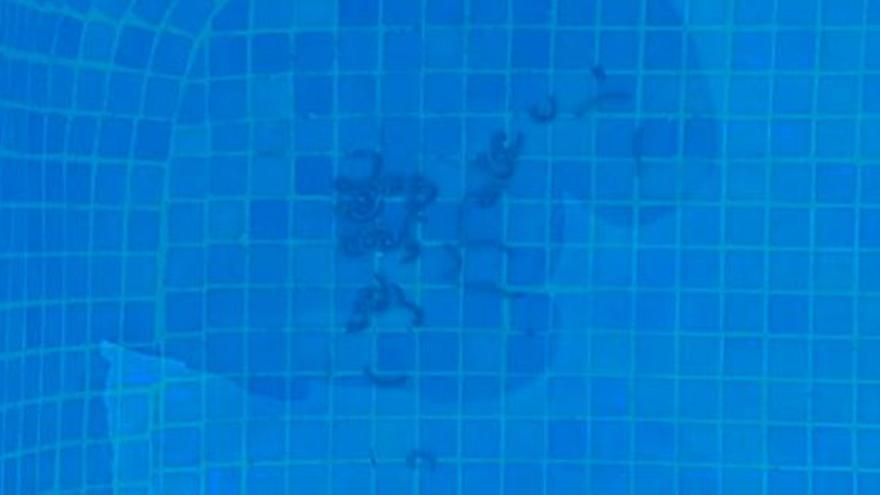 Gusanos hasta en piscinas de Sagunt