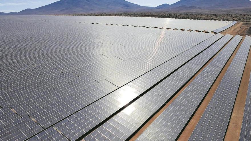 Fotovoltaicas: el bosque inanimado