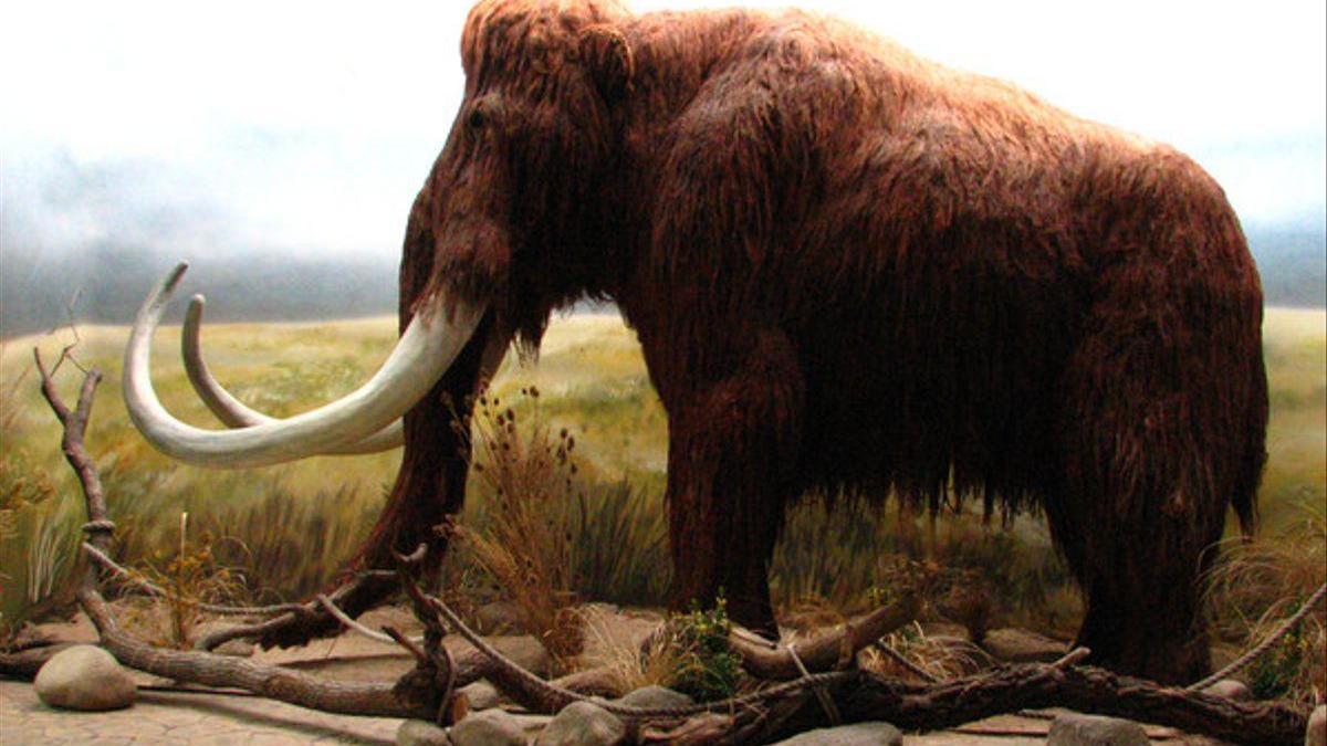 ¿Cuál es el verdadero origen de los mamuts?