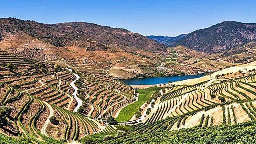 Los paisajes del vino Patrimonio de la Unesco