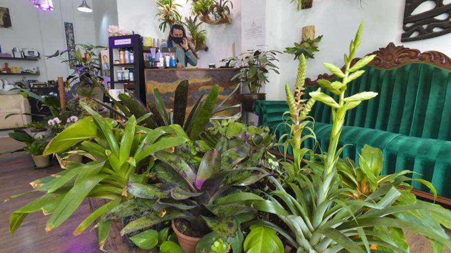Jardín botánico dentro de la peluquería Xerach