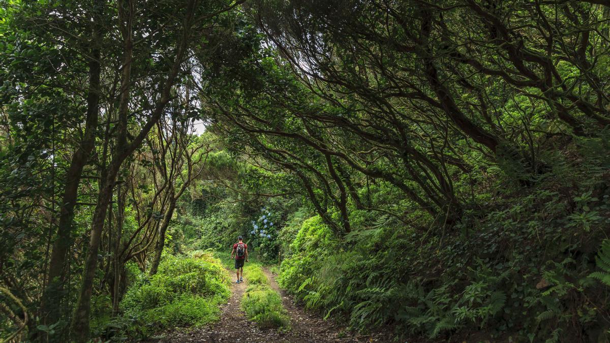 Descubre el Corazón de Tenerife