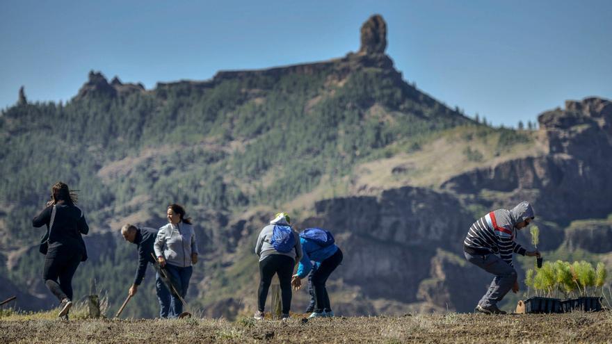 Foresta gana el certamen de la Fundación Ecodes para continuar reforestando la cumbre grancanaria