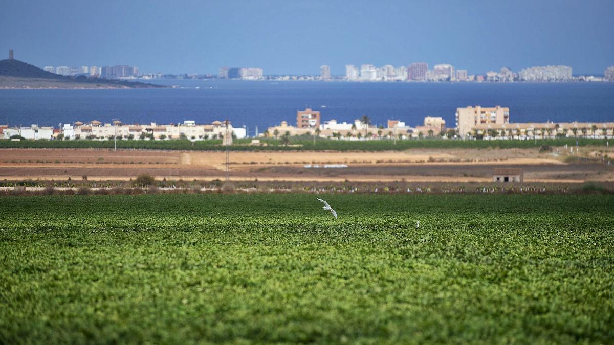 Aumentarán un 90% las inspecciones para garantizar la Ley del Mar Menor