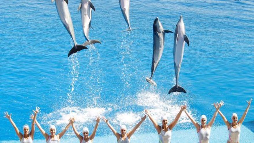 """Delfines, natación sincronizada  y Beatles para """"Las noches"""""""