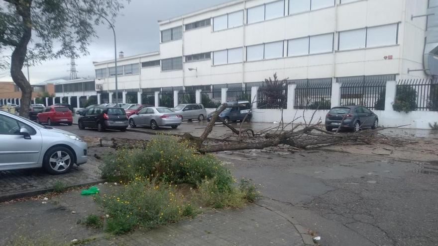 Un árbol caído corta una calle de Palmeras frente al colegio Duque de Rivas