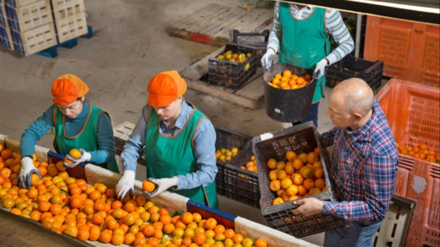 Estas son la poblaciones de Valencia que buscan trabajadores para la campaña de los cítricos y otros empleos