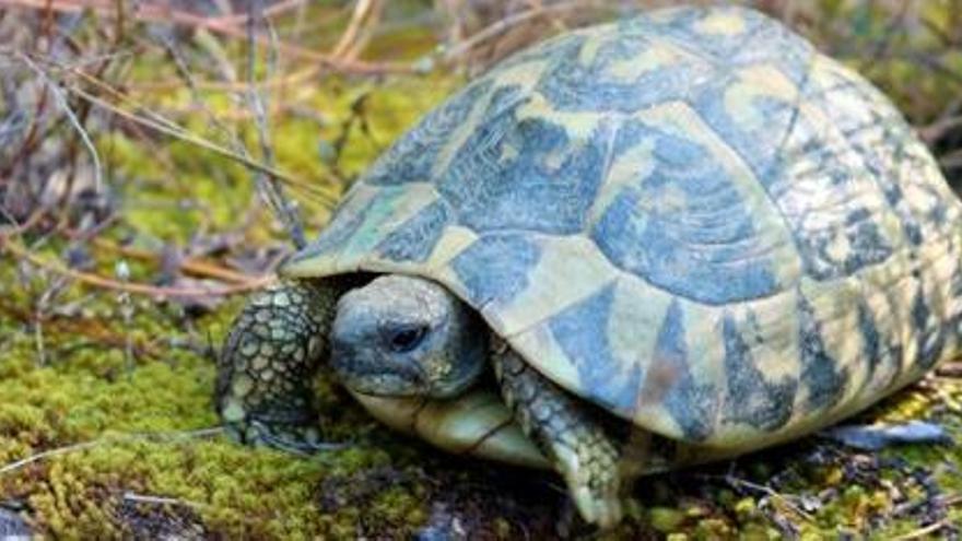 Els centres de fauna de la Generalitat atenen prop de 19.000 animals el 2020