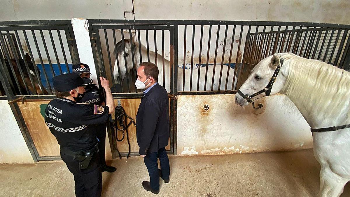 Los cargos policiales y el concejal de Protección Ciudadana visitan al caballo Flamenco. A la derecha, una agente saluda al equino, que se recupera bien. | LEVANTE-EMV