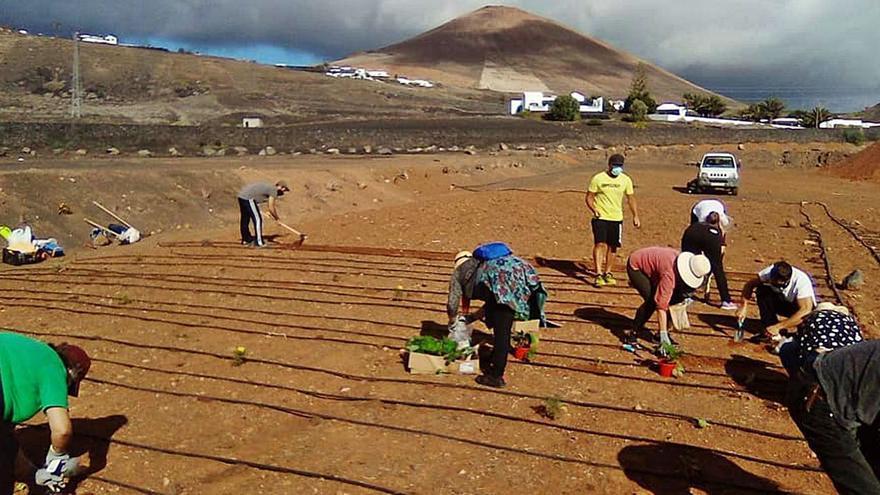 Tías impulsa la agricultura ecológica y la participación en huertos sociales
