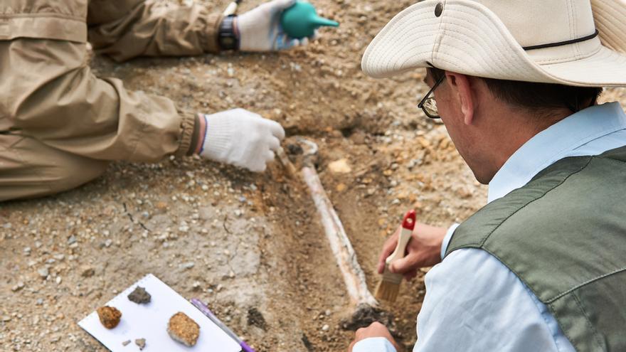 Descubren tres nuevas especies prehistóricas de los albores de los mamíferos modernos