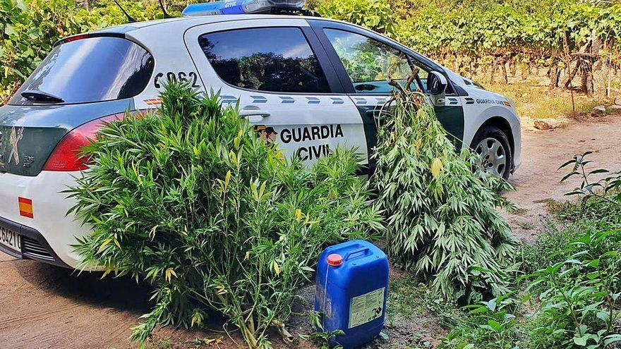 Investigan a un vecino de Leiro por una plantación de marihuana