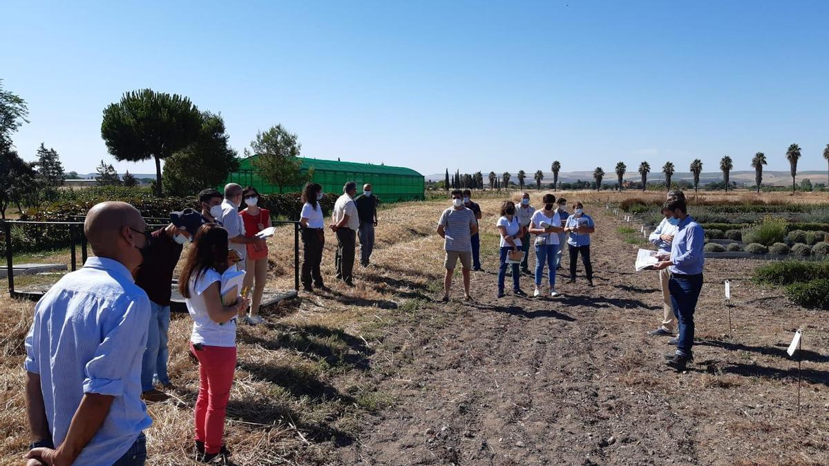 Asistentes a la presentación del ensayo sobre plantas aromáticas de la Diputación.