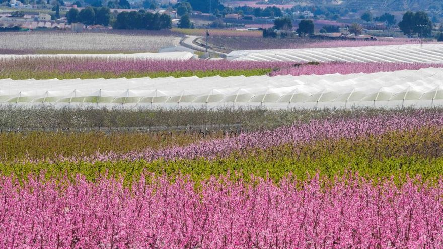 La Floración de Cieza: un mundo de color de rosa