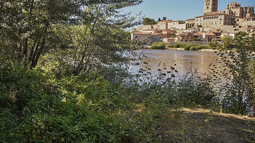 El Ayuntamiento de Zamora descarta que los vertidos al río Duero salgan de enganches ilegales