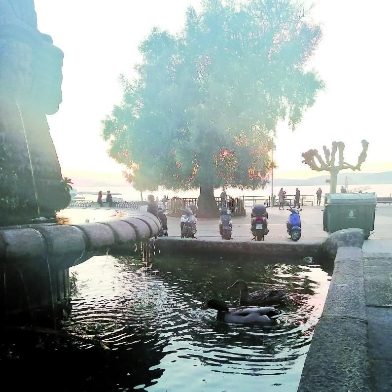 Al agua, patos