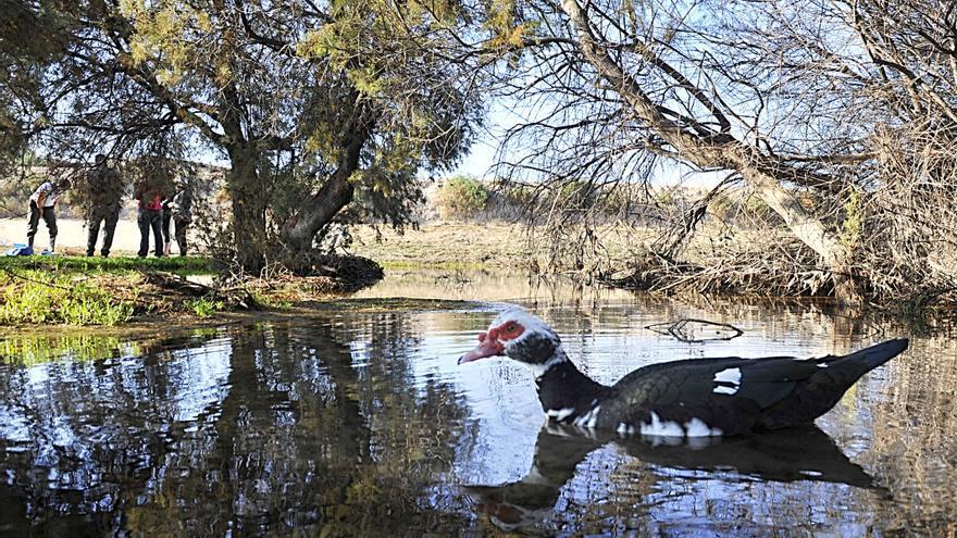 Elche busca alternativas a consumir agua de los acuíferos