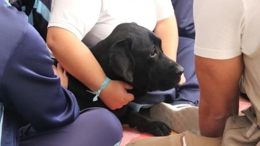 Los perros pueden detectar la Covid-19 con un 94% de precisión
