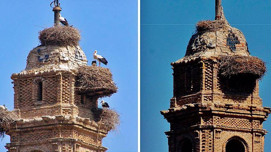Muere un pollo de cigüeña en las obras del convento de Caspe