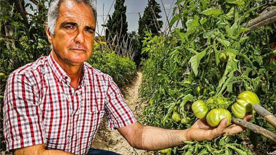 Batalla por el control de la agricultura ecológica ante los elevados fondos del Consell