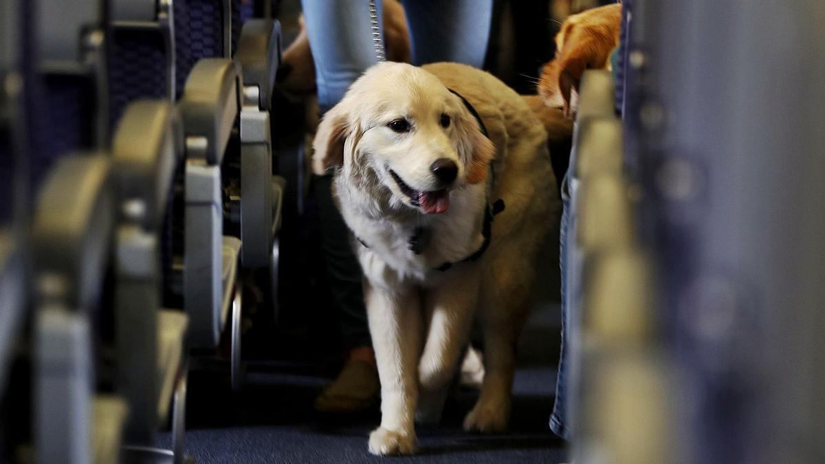 Das Gewicht entscheidet, ob Hunde in der Kabine oder im Frachtraum mitfliegen.   FOTO: DPA
