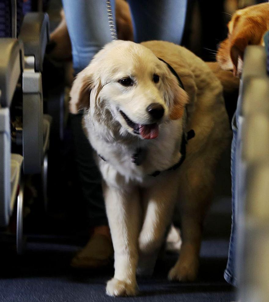 Bei diesen Airlines fliegt Ihr Hund mit nach Mallorca