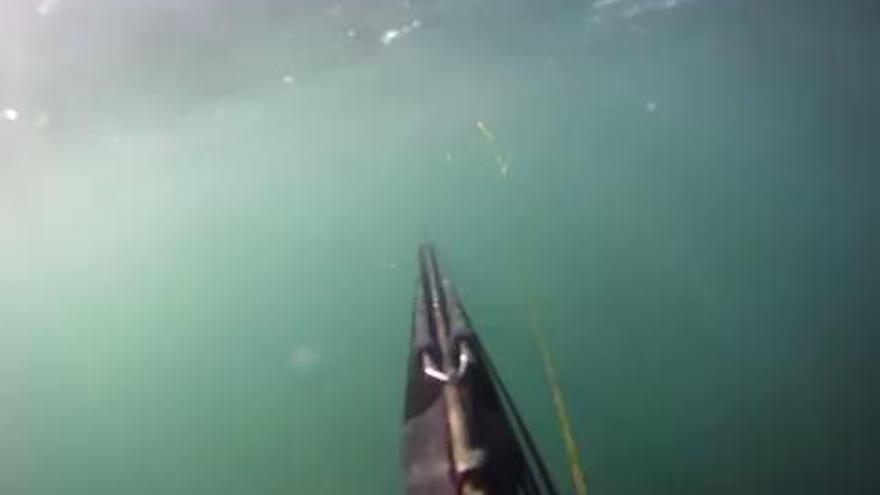 Grava amb una càmera submarina com l'ataca un tauró blanc