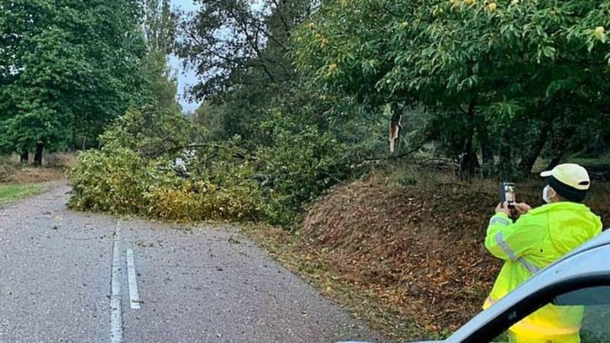 Corte de la carretera que une Trefacio con Pedrazales