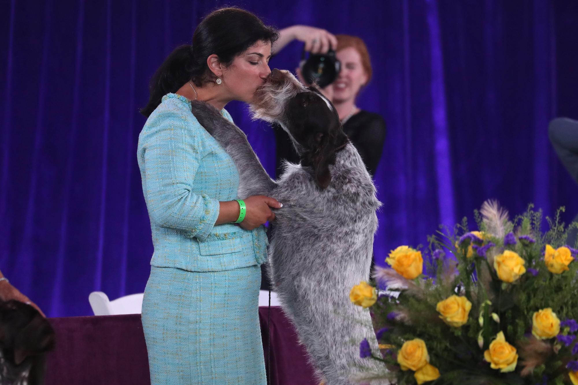 145è Westminster Kennel Club Dog Show