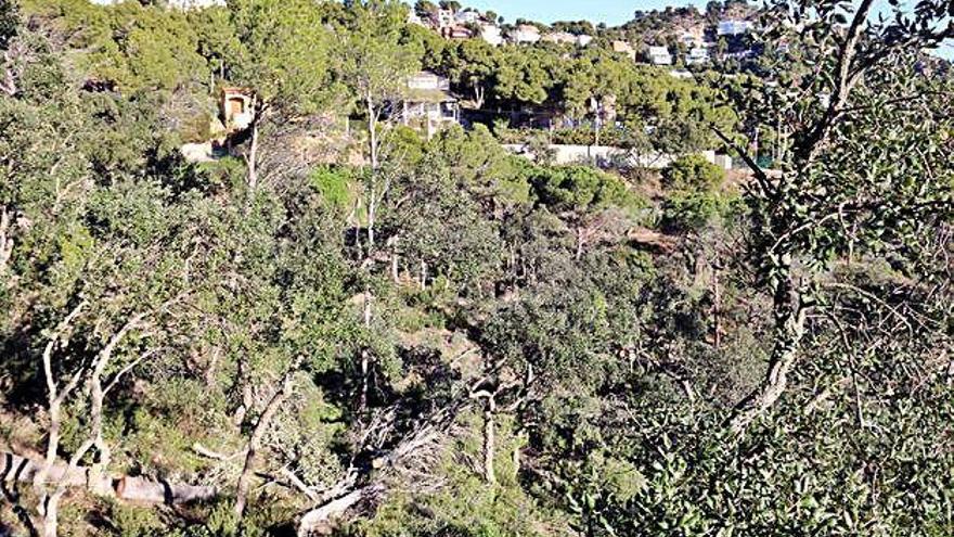 El creixement d'habitatges al litoral és «molt superior» al que diu el Govern, denuncia SOS Costa Brava