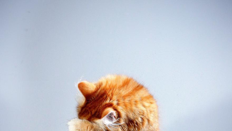 Diez cosas que los gatos odian de ti (y tú no sabías)