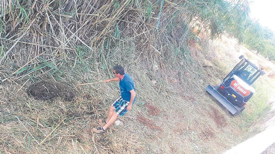 Dénia acaba con las madrigueras de los jabalíes que atacaron a dos vecinos