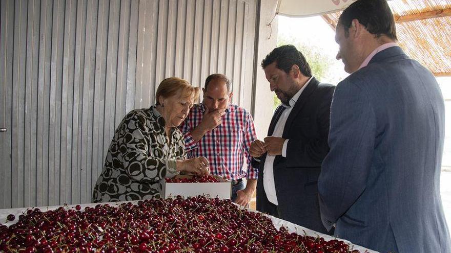 La Diputación impulsa el consumo de la cereza autóctona con Castelló Ruta de Sabor
