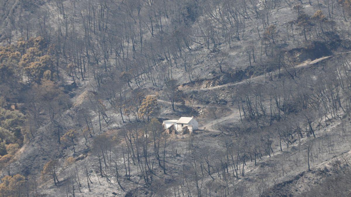 Zona arrasada por el incendio de Sierra Bermeja.