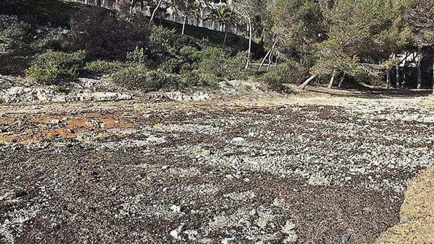 Cuatro de las doce playas azotadas por 'Gloria' en Santanyí han desaparecido