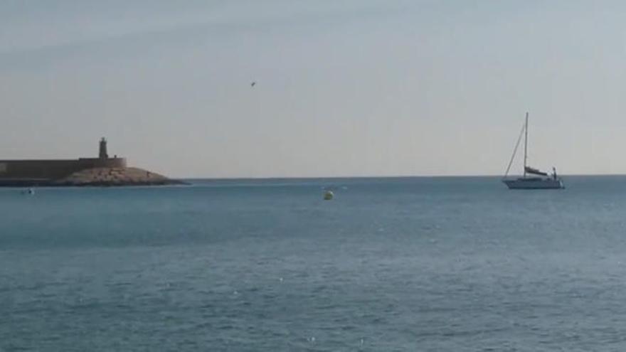 Los delfines se pasean por la costa de Xàbia
