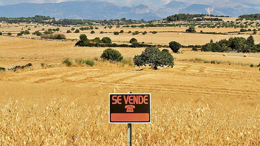 So kommen Sie an Ihr eigenes Feld auf Mallorca