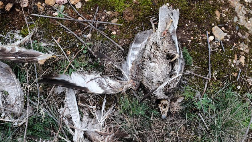 La Junta organiza una jornada sobre mortandad de aves en los tendidos