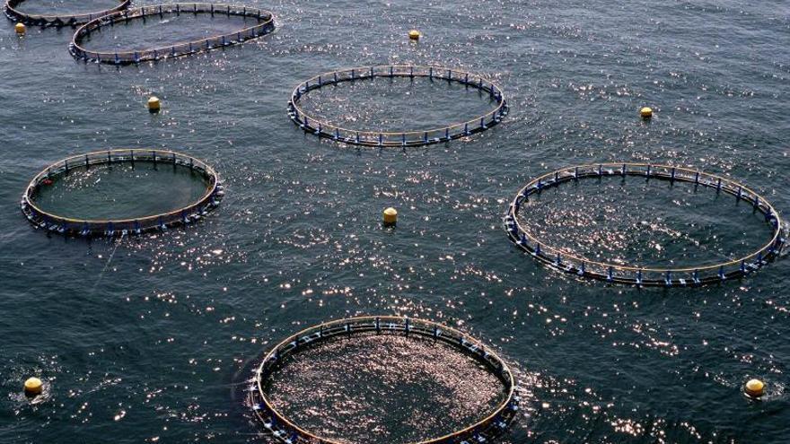 La acuicultura gana terreno en los productos del mar
