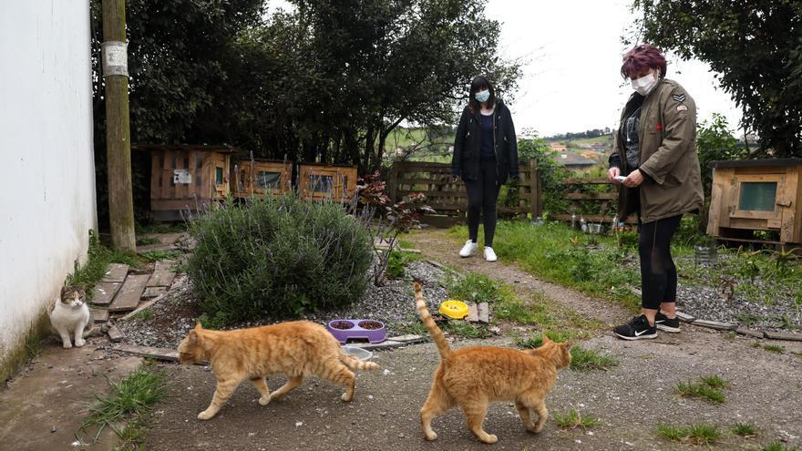 Protectoras y voluntarios se vuelcan con las colonias de gatos en Gijón, en auge por el aumento de los abandonos