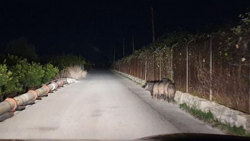 """El PP de Alzira pide """"acciones directas"""" para actuar contra el aumento """"alarmante"""" de la fauna salvaje"""