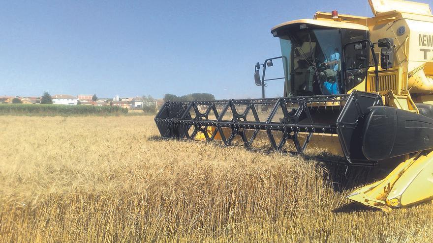 La producción agraria en Castilla y León aumentó un 10% en 2020