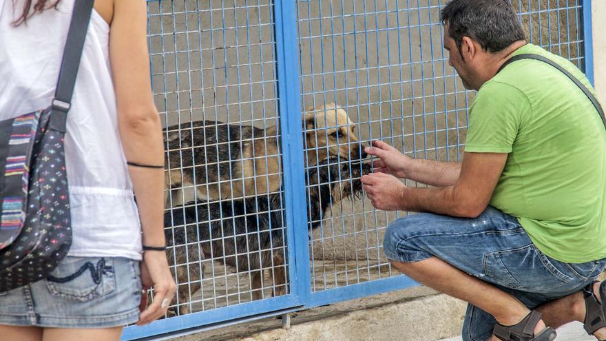El PP advierte que el albergue animal de Torrevieja costará 780.000 euros, más del doble de lo previsto por el anterior mandato